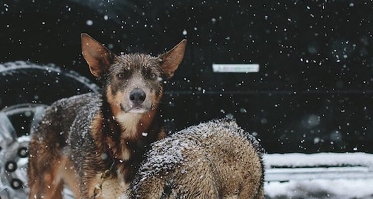 most awesome pictures dogs snow