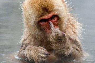 fuck you monkey