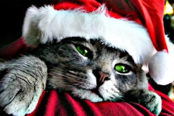 cat holidays
