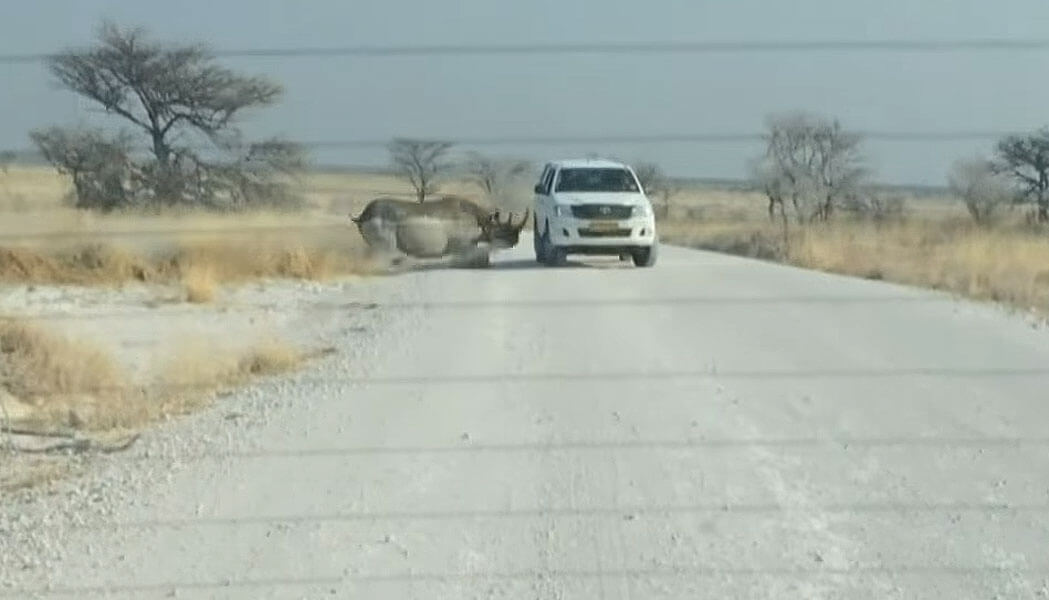 Rhino Road Rage