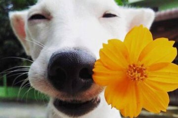 Daily Fresh Baked Randomness (50 Photos) dog with a yellow flower