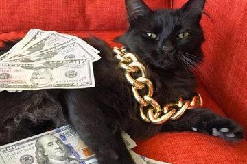 catsaturday money talks cats randomness