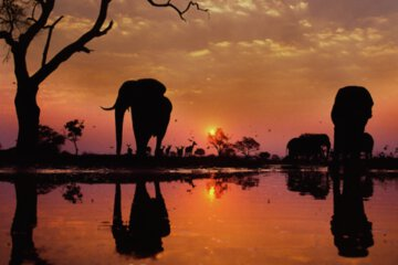 Daily Fresh Baked Randomness (30 Photos) africa elephant