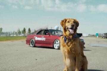 Jeff The Drift Dog