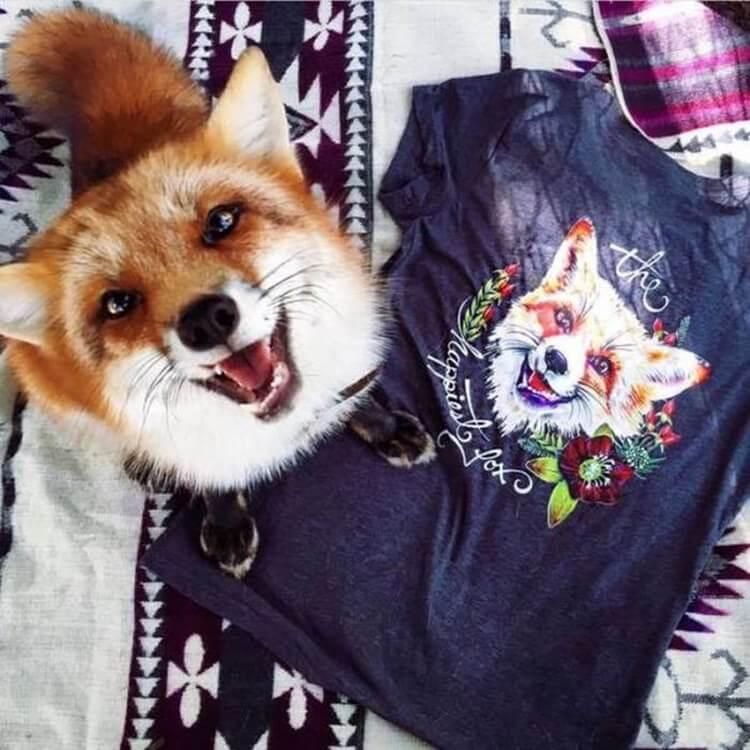 Randomness fox