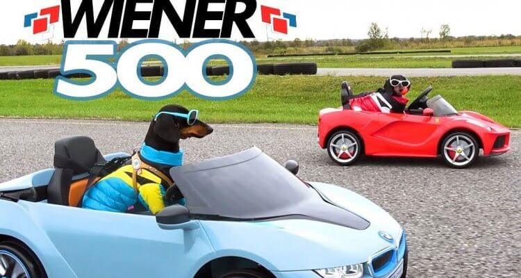 Wiener Dogs in Racing Cars 1
