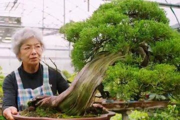 World's First and Only Female Bonsai Sensei 1