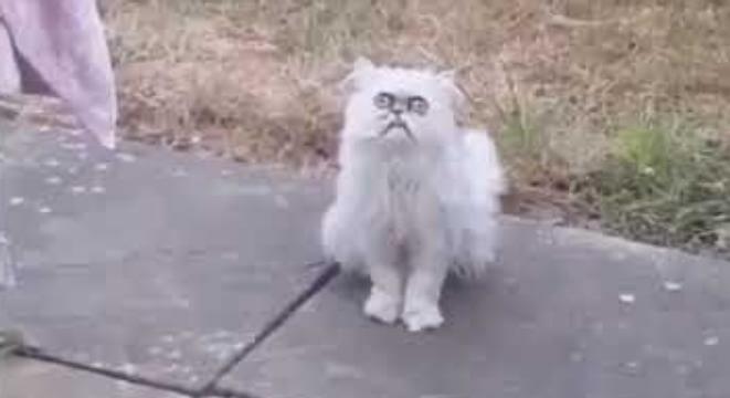 A Weird-Looking Stray Cat 1