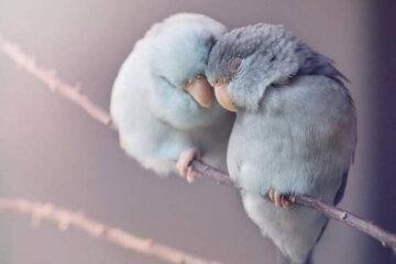 cute birds